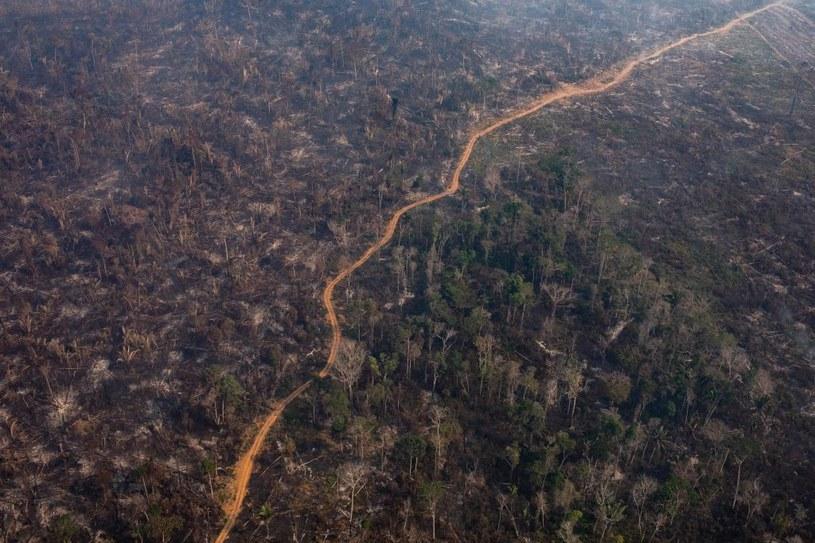 Spalony las w Amazonii /Victor Moriyama /Getty Images