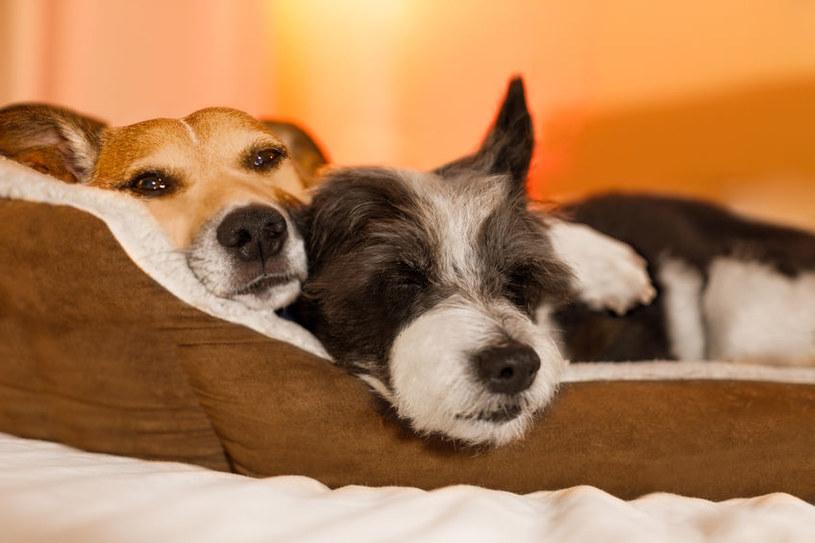 Spanie z psem czy kotem dostarcza wielu korzyści /123RF/PICSEL