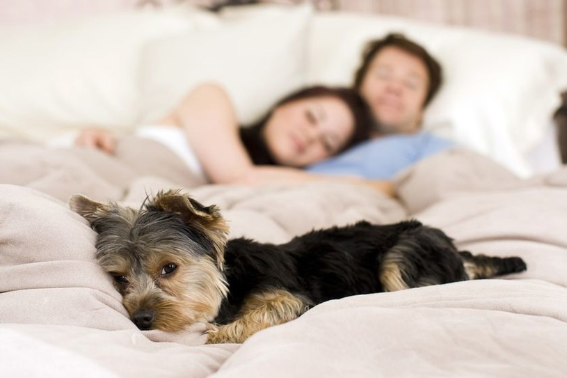 spanie z psem /© Photogenica