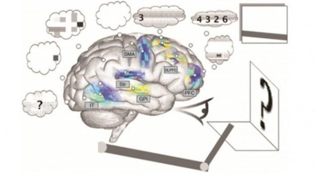 Spaun symuluje funkcjonowanie ludzkiego mózgu /materiały prasowe