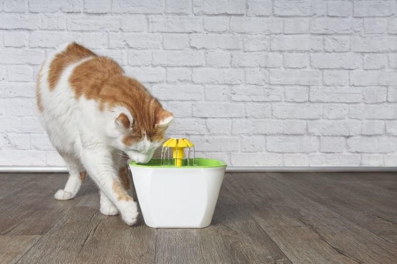 Specjalna fontanna na wodę zainteresuje kota bardziej niż zwykła miska