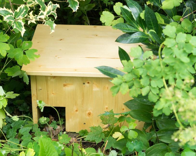 Specjalne domki zachęcą jeże do zamieszkania w ogrodzie /123RF/PICSEL