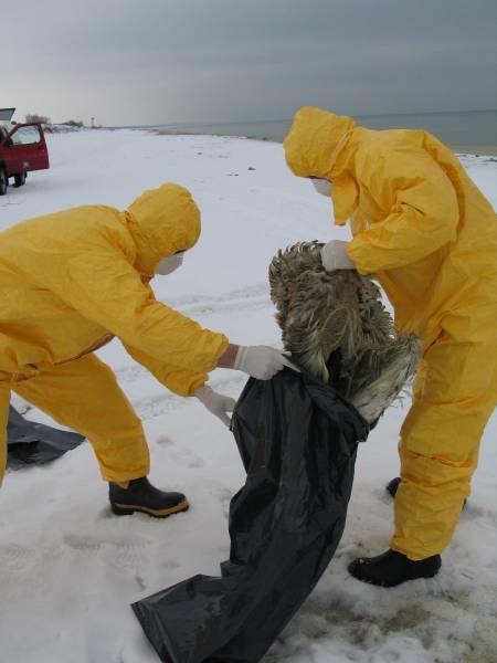 Specjalne służby zbierają martwe ptaki /RMF
