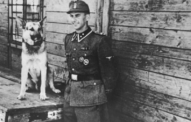 Specjalnie szkolone psy miały zająć miejsce strażników obozowych /Wikimedia Commons /INTERIA.PL/materiały prasowe