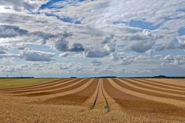 Spekulacja ziemią rolną przez cudzoziemców będzie utrudniona /©123RF/PICSEL