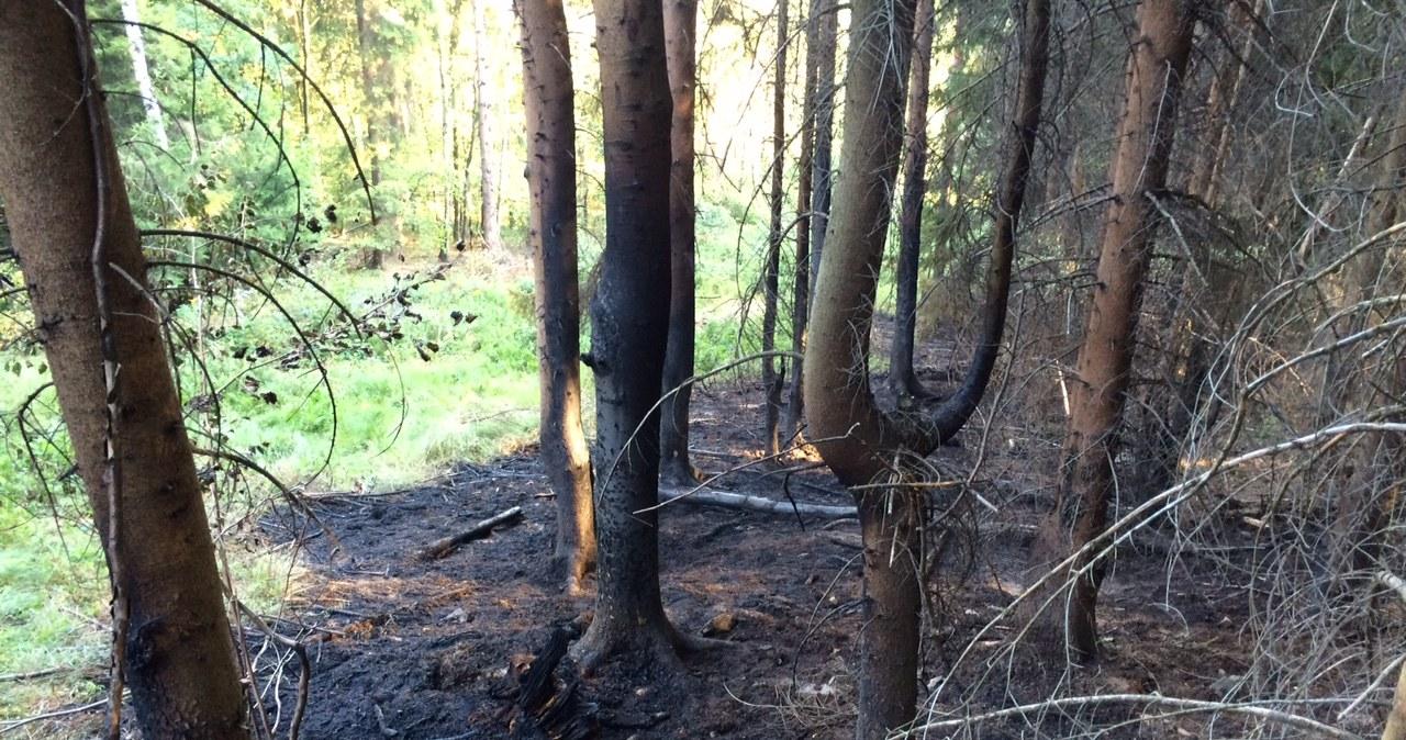 """Spłonęło 200 m2 lasu. W okolicy ma być ukryty """"złoty pociąg"""""""