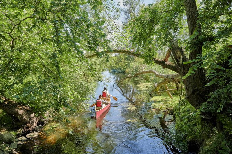 Spływ po niemieckich rzekach to znakomity sposób na kontakt z przyrodą /fot. Florian Trykowski/DZT /materiały promocyjne