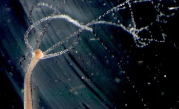 Spojrzenie sprzed 600 milionów lat