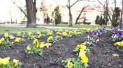 Spokój i oznaki wiosny, czyli sobotni poranek w Rawie Mazowieckiej
