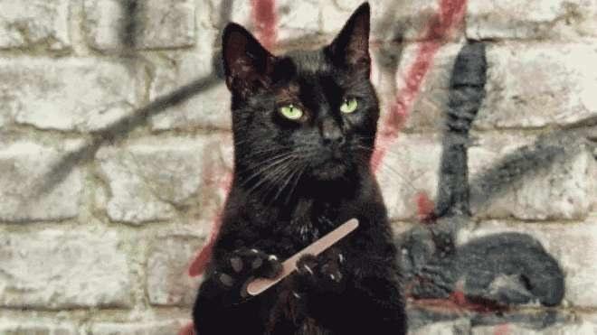 Sposób na drapiące koty /© Photogenica