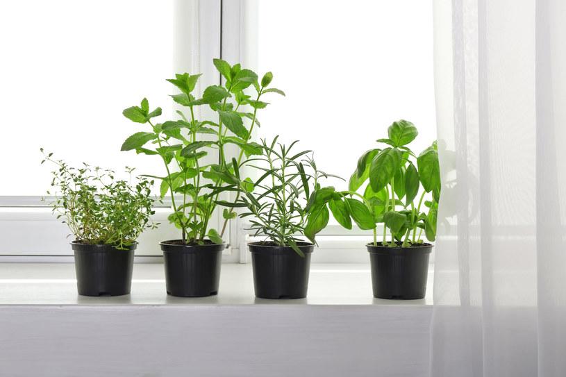 Sposób ustawienia roślin w mieszkaniu ma znaczenie /123RF/PICSEL