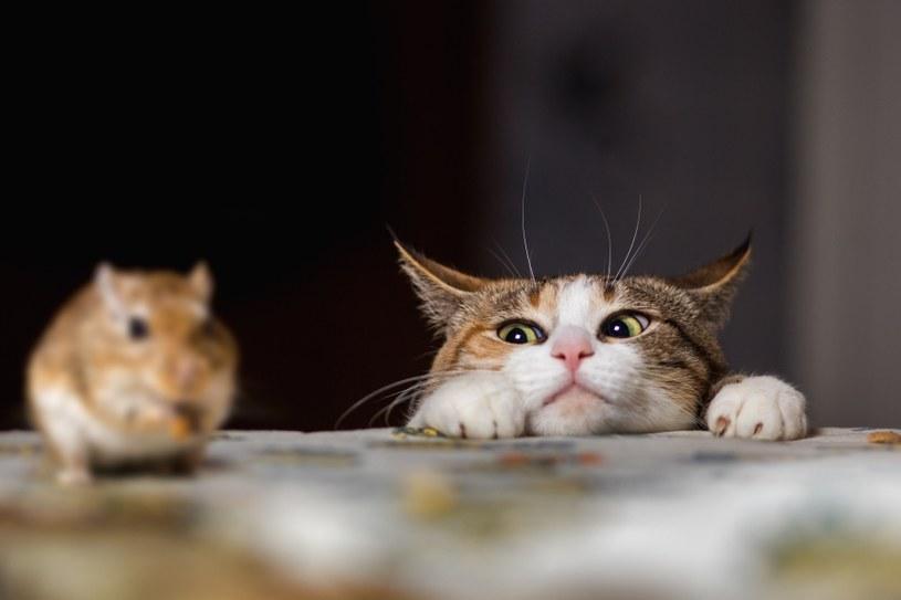 Sposobem na myszy jest kot /©123RF/PICSEL