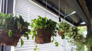 Sposoby na podlewanie roślin podczas wyjazdu
