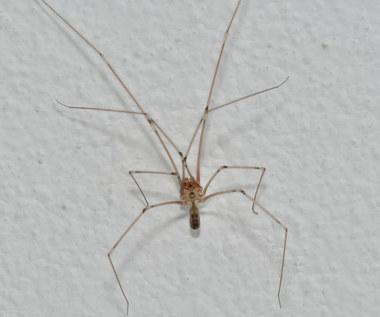 Sposoby na pozbycie się pająków z domu