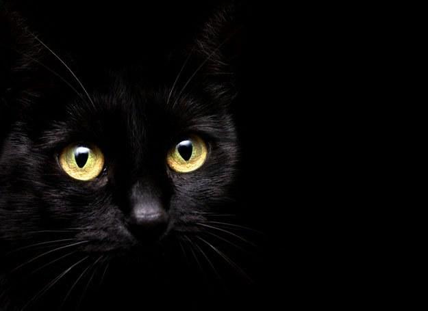 Spotkać czarnego kota w piątek 13. to prawdziwy pech... /© Panthermedia