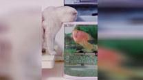Spotkanie ryby z kotem. Finał zaskakuje