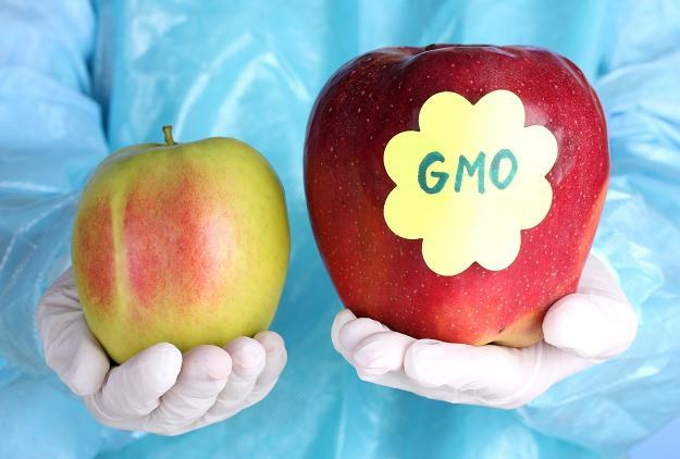 Sprawa dotyczyła zakazu wytwarzania i stosowania w żywieniu zwierząt pasz genetycznie modyfikowanych /©123RF/PICSEL