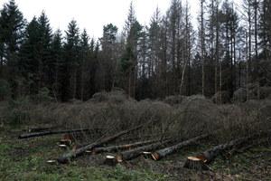 Sprawa Puszczy Białowieskiej: Aktywiści uznani za winnych, ale kary nie będzie