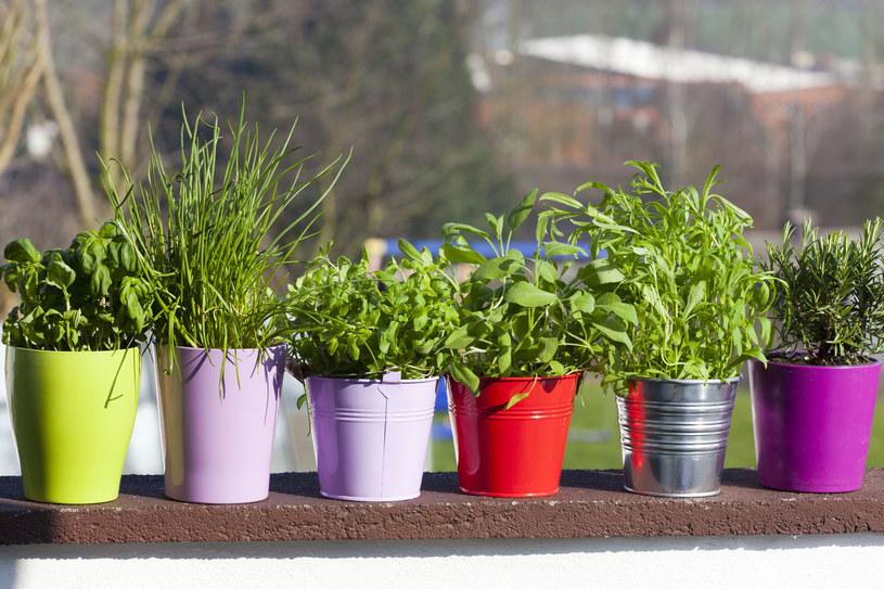 Sprawdź, jak hodować w domu sklepowe zioła /123RF/PICSEL