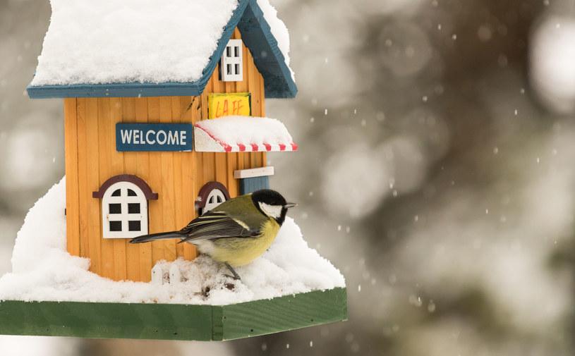 Sprawdź, jak rozsądnie dokarmiać ptaki zimą /123RF/PICSEL