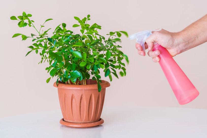 Spryskiwanie roślin /©123RF/PICSEL