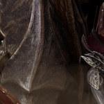 Sprzedaż Baldur's Gate 3 rośnie jak szalona - twierdzi szef studia odpowiedzialnego za grę