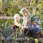 Sprzedaż ogródka działkowego bez PIT