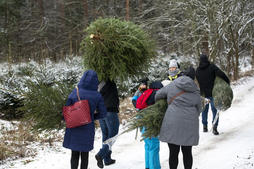 Sprzedaż świątecznych choinek na Podlasiu /MICHAL KOSC /Agencja FORUM