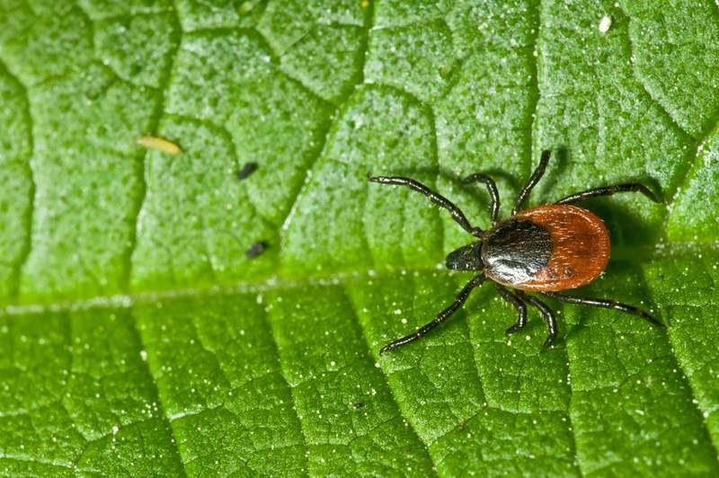 środki owadobójcze na kleszcze /© Photogenica