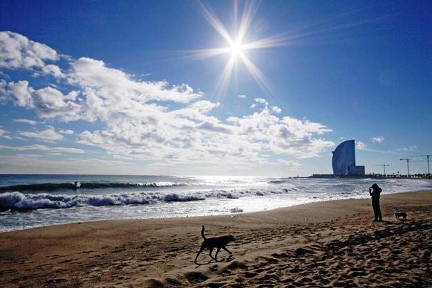 Srogie kary dla właścicieli psów w Barcelonie /©123RF/PICSEL