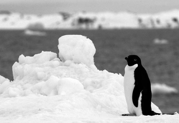 Stacja znajduje się na terenie Antarktydy Wschodniej (zdjęcie ilustracyjne) /AFP