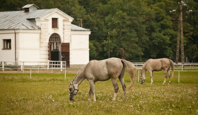 Stadnina koni w Janowie Podlaskim /Fot. Wojciech Jargilo /Reporter