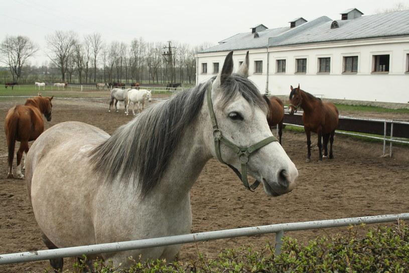 Stadnina w Janowie Podlaskim /Polska Press /East News