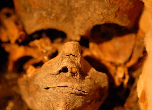 Stan niektórych szczątków z Doliny Królów nie jest najlepszy... /Discovery World