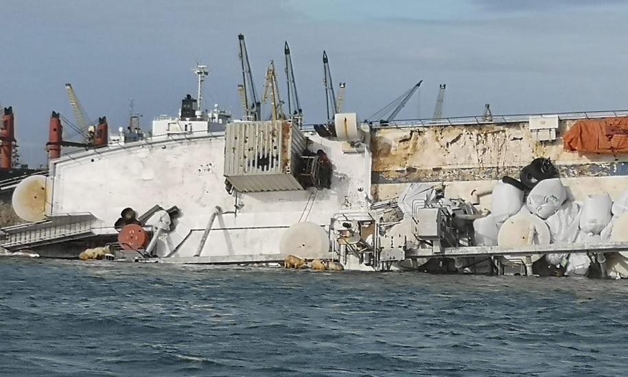 Statek z owcami płynął do Arabii Saudyjskiej /ISU  /PAP/EPA