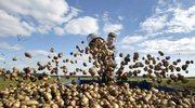 Stawki minimalne w rolnictwie