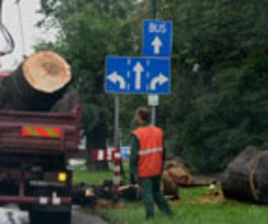 Stop śmierci na drzewach