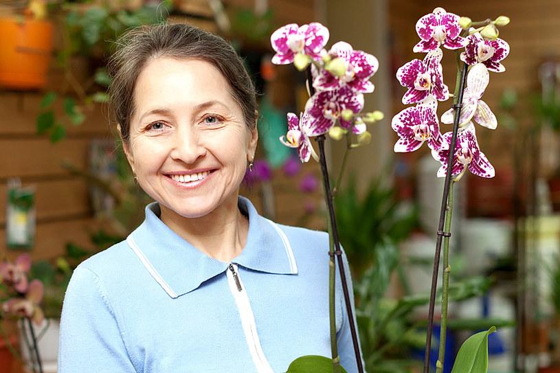 Storczyk to ulubiony kwiat Polaków. Warto znać proste triki, by kwitł przez długie miesiące /123RF/PICSEL