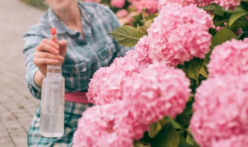 Stosuj naturalne wyciągi z roślin /©123RF/PICSEL