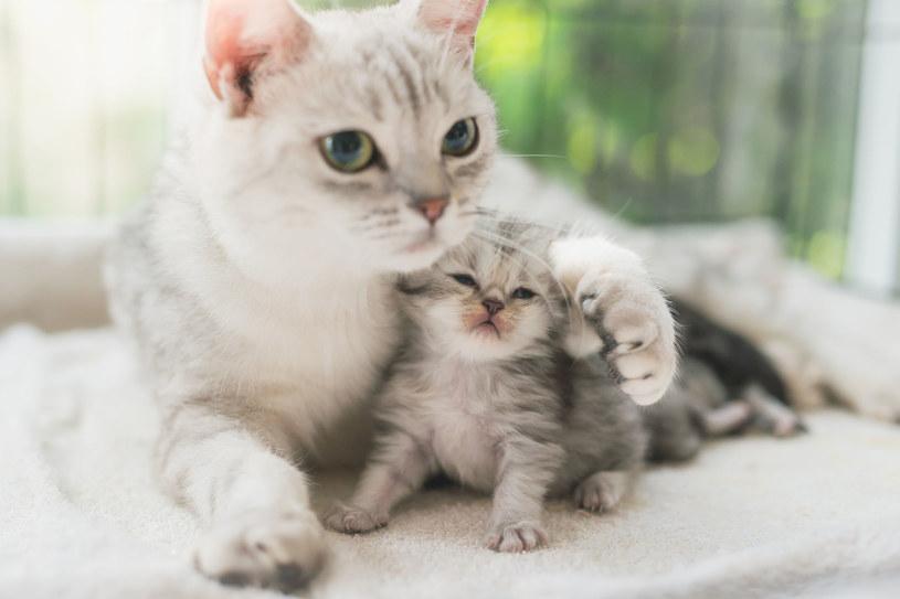 Stowarzyszenie Sos Koty Mielec postanowiło bić rekord Guinnessa, by pomóc swoim podopiecznym /123RF/PICSEL