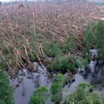 Straty po nawałnicach. Nie ma lasów - nie będzie podatków