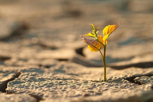 Straty suszowe wzrosły do ponad 2 mld zł /©123RF/PICSEL