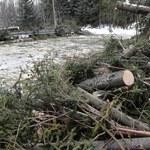 Strażacy: Ponad 8 tys. interwencji wskutek silnych wichur w poniedziałek