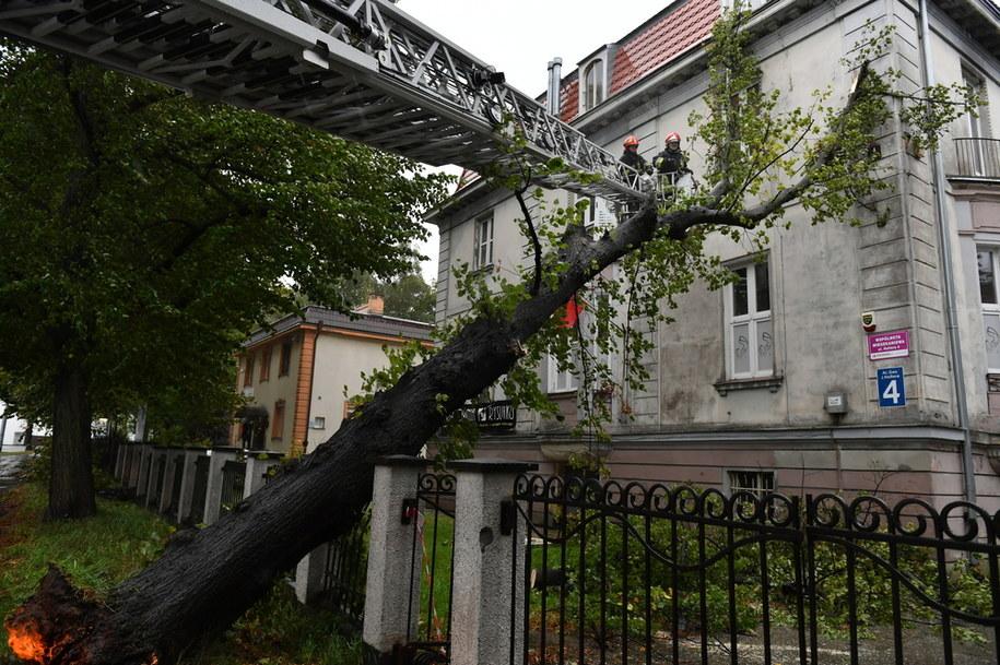 Strażacy pracujący nad usunięciem drzewa, które podczas wichury powaliło się na stojący obok budynek przy al. Hallera w Gdańsku / Adam Warżawa    /PAP