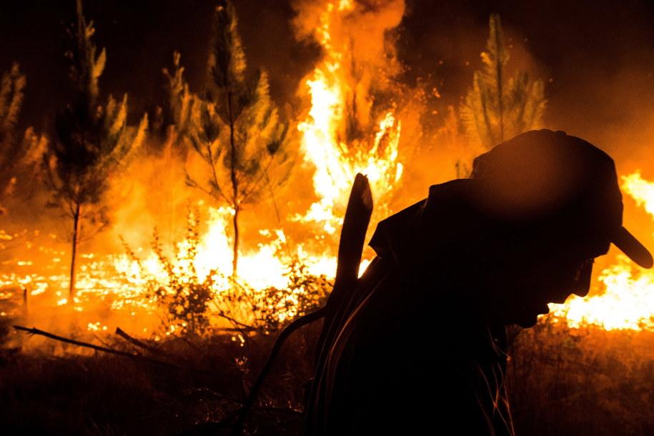 Strażacy robią co mogą, ale ogień wciąż się rozprzestrzenia /Camilo Tapia /PAP/EPA
