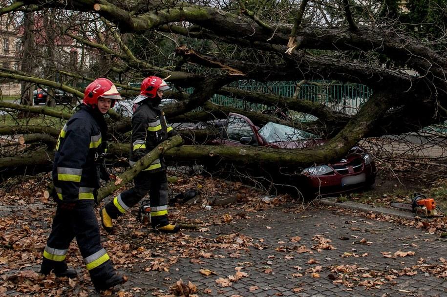Strażacy usuwają drzewo z ulicy Parkowej we Wrocławiu /strażacyMaciej Kulczyński    /PAP