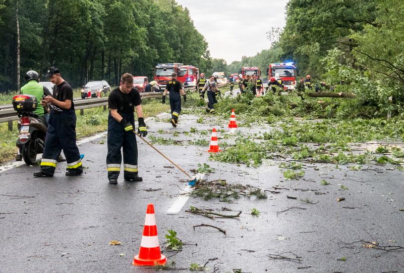 Strażacy usuwają powalone drzewa z drogi krajowej nr 1 w Piasku /Marek Zimny /PAP