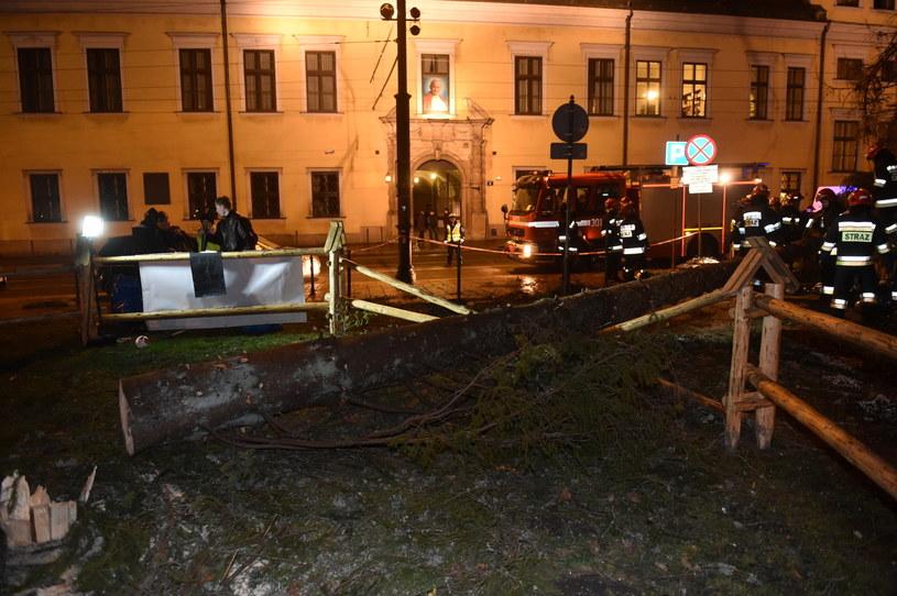Strażacy usuwają przewróconą przez wiatr choinkę pod Oknem Papieskim w Krakowie /Jacek Bednarczyk /PAP