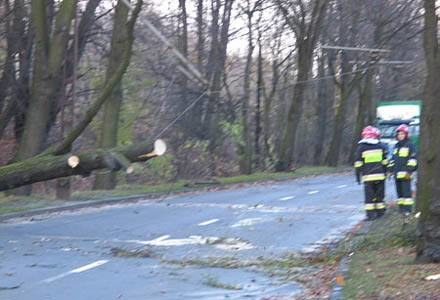 Strażacy usuwają z dróg połamane drzewa /RMF