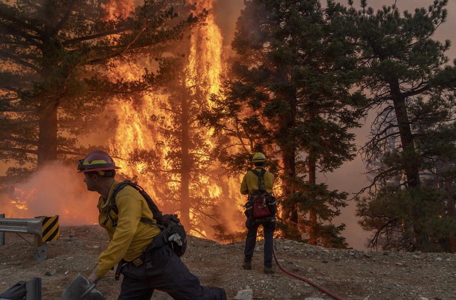 Strażacy walczący z rozprzestrzeniającym się ogniem w Kalifornii /KYLE GRILLOT /PAP/EPA